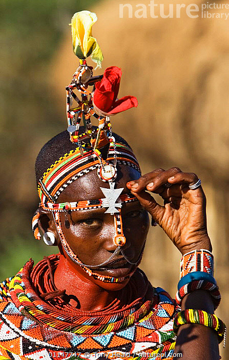 Samburu girl with bead hair pieces and necklaces, Laikipia, Kenya, AFRICA,COLOURFUL,EAST AFRICA,FACES,HEADS,JEWELLERY,PEOPLE,PORTRAITS,RESERVE,TRADITIONAL,TRIBES,VERTICAL,EAST-AFRICA, Tony Heald