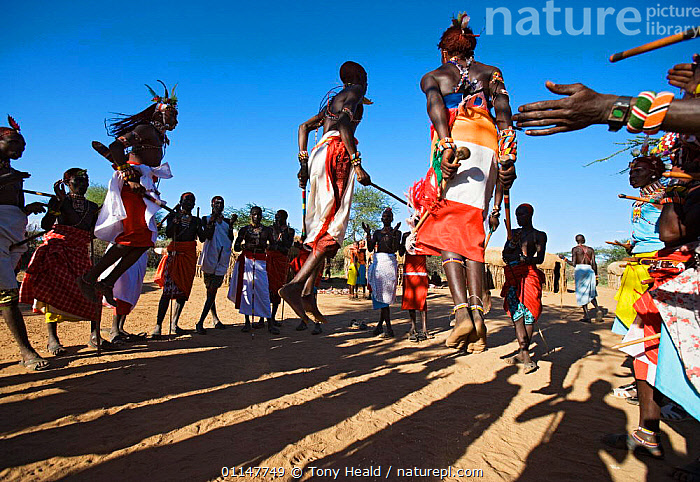 Samburu people dancing, Laikipia, Kenya, AFRICA,EAST AFRICA,GROUPS,JUMPING,RESERVE,SHADOWS,TRADITIONAL,TRIBES,EAST-AFRICA, Tony Heald