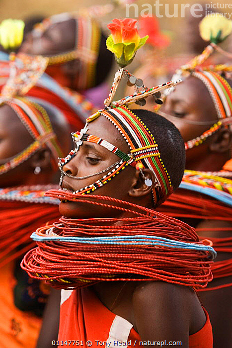 Profile of Samburu girls dancing with traditional bead necklaces, Laikipia, Kenya, AFRICA,COLOURFUL,EAST AFRICA,EAST AFRICA,JEWELLERY,PEOPLE,TRADITIONAL,TRIBES,VERTICAL,EAST-AFRICA, Tony Heald