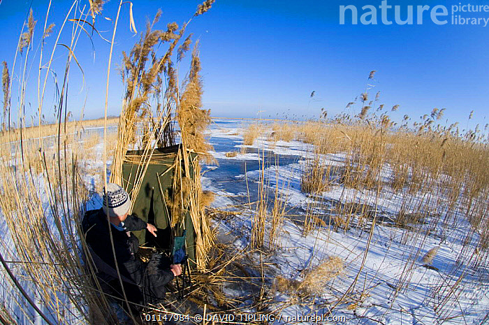 Camouflaged hide for photographing Red-breasted Geese, Durankulak Lake, Bulgaria., CAMOUFLAGE,EUROPE,HIDES,PEOPLE,PHOTOGRAPHY,WETLANDS,WINTER, DAVID TIPLING