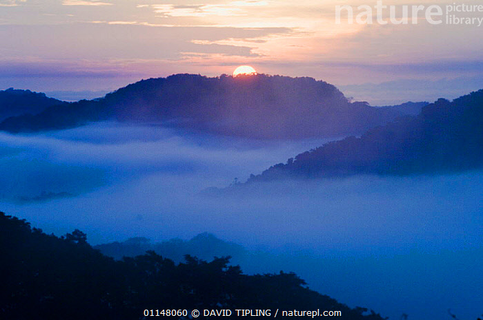 Sun rising behind a mist filled lowland rainforest valley, Soberiana NP, Panama., CENTRAL AMERICA,LANDSCAPES,MIST,MORNING,SUN,SUNRISE,TROPICAL RAINFOREST,CENTRAL-AMERICA, DAVID TIPLING
