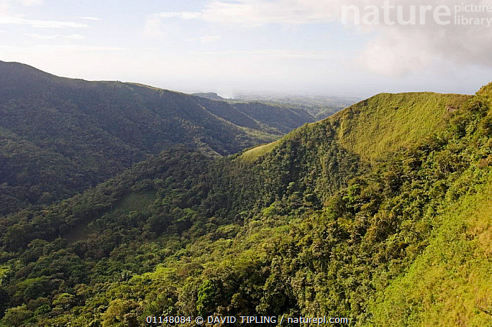 Rainforest with cleared patches, El Valle, Panama.  ,  CENTRAL AMERICA,DEFORESTATION,FORESTS,HILLS,LANDSCAPES,TROPICAL RAINFOREST,CENTRAL-AMERICA  ,  DAVID TIPLING
