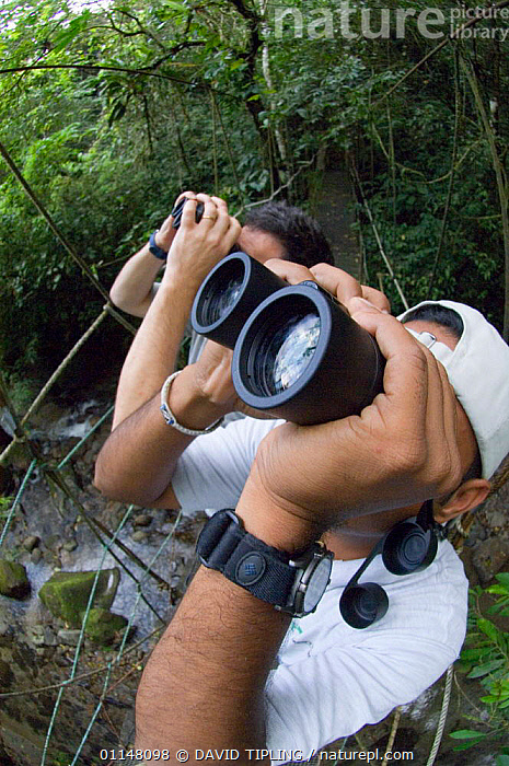 Toursits watching birds through binoculars from canopy walkway, foothill rainforest, El Valle, Panama.  ,  BIRDING,BIRDWATCHING,CENTRAL AMERICA,ECOTOURISM,OUTDOOR PURSUITS,PEOPLE,TROPICAL RAINFOREST,TWO  ,  DAVID TIPLING