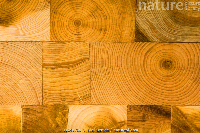 Detail of annular tree rings in a hand-made wooden box, Scotland.  ,  CRAFTS,EUROPE,GROWTH,TEXTURE,UK,WOOD,United Kingdom,Concepts,British  ,  Niall Benvie