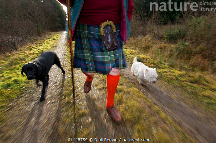Scotsman wearing traditional kilt walking his dogs in a forest, UK.  ,  DOGS,EUROPE,EXERCISE,LEISURE,MOVEMENT,PEOPLE,TRADITIONAL,UK,WALKING,WOODS,United Kingdom,British  ,  Niall Benvie