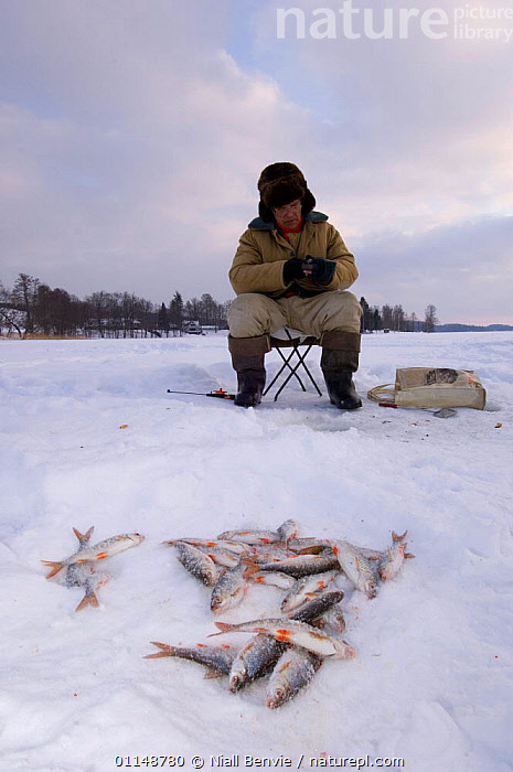 Ice fisherman on Puhajarv with fish catch, Estonia.  ,  BALTIC,CIS,EUROPE,FISH,FISHING,PEOPLE,SNOW,VERTICAL  ,  Niall Benvie