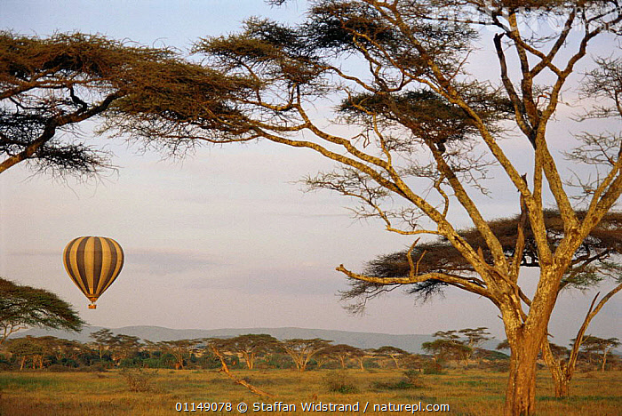 Tourists in Hot air balloon over the Serengeti NP, Tanzania, East Africa  ,  acacia,AFRICA,East Africa,EAST AFRICA,ecotourism,HOLIDAYS,LANDSCAPES,RESERVE,SAVANNA,TOURISM,Travel,Grassland,Concepts,EAST-AFRICA,,Serengeti National Park, UNESCO World Heritage Site,  ,  Staffan Widstrand