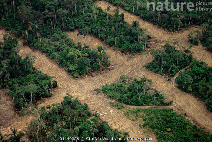 Aerial view over the rainforest showing transect deforestation, Manaus, Brazil, South America  ,  Aerial,DEFORESTATION,ENVIRONMENTAL,INDUSTRIAL,INDUSTRY,LANDSCAPES,logging,PATTERNS,ROADS,south america,SOUTH AMERICA,transect,tropical rainforest,SOUTH-AMERICA  ,  Staffan Widstrand