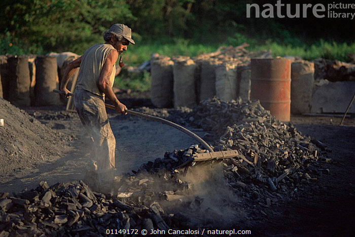 Man working in charcoal industry smoking a pipe, West Indies  ,  CARIBBEAN,charcoal,dusty,ENERGY,FIRE,PEOPLE,Smoking,TRADITIONAL,WORKING,West Indies  ,  John Cancalosi