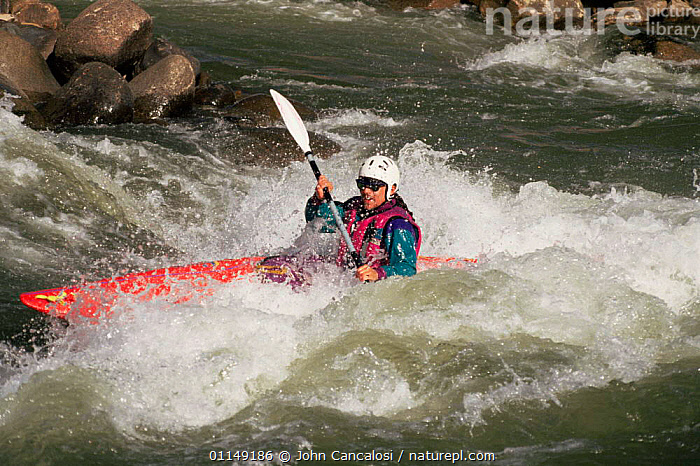 Kayaking on rapids in Colorado River, Near Durango, Colorado, USA  ,  activity,BOATS,canoe,CANOEING,kayak,north america,OUTDOOR PURSUITS,PEOPLE,rapids,RIVERS,sports,USA,watersports, WATERSPORTS, WATERSPORTS, WATERSPORTS  ,  John Cancalosi