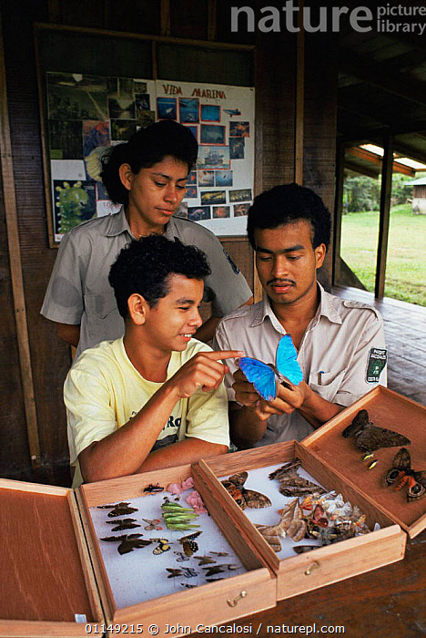 Taxonomist showing Morpho butterfly to trainee, tropical rainforest, Costa Rica  ,  BUTTERFLIES,CENTRAL AMERICA,collection,EDUCATION,INSECTS,LEPIDOPTERA,PEOPLE,RESEARCH,scientific,scientists,study,teaching,training,VERTICAL,Invertebrates  ,  John Cancalosi