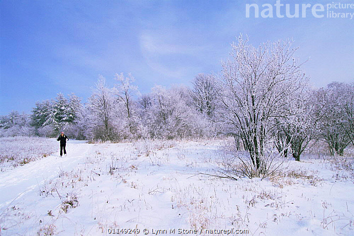 Cross country skiing, St Charles, Illinois, USA  ,  LANDSCAPES,LEISURE,NORTH AMERICA,OUTDOOR PURSUITS,PEOPLE,SKIING,SNOW,SPORT,USA,WINTER  ,  Lynn M Stone