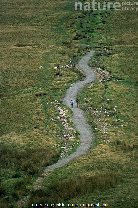 Hikers walking to Pen y Pan, Brecon Beacons NP, Powys, Wales, UK  ,  EUROPE,hiking,LANDSCAPES,LEISURE,OUTDOOR PURSUITS,PEOPLE,RESERVE,UK,VERTICAL,United Kingdom,British,WALES,GettyBOV  ,  Nick Turner