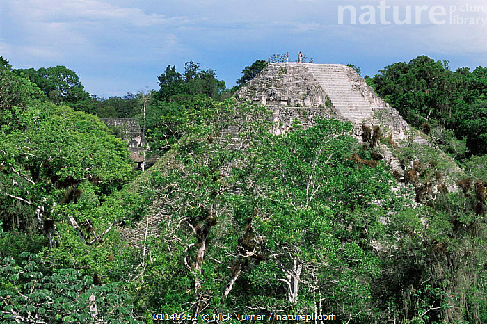 Mayan ruins and rainforest canopy, Tikal, Guatemala  ,  ancient,BUILDINGS,CENTRAL AMERICA,Civilisation,CULTURES,LANDSCAPES,ruins,temples,TRIBES,tropical rainforest,CENTRAL-AMERICA  ,  Nick Turner