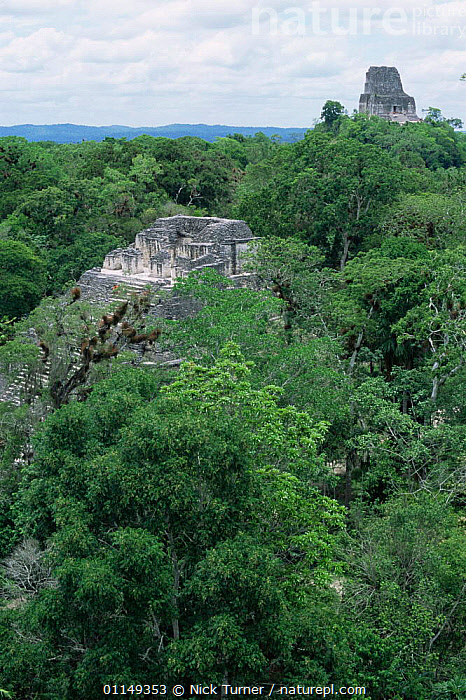 Mayan ruins and rainforest canopy, Tikal, Guatemala  ,  ancient,BUILDINGS,CENTRAL AMERICA,Civilisation,CULTURES,LANDSCAPES,OLD,ruins,temples,TRIBES,tropical rainforest,VERTICAL,CENTRAL-AMERICA  ,  Nick Turner