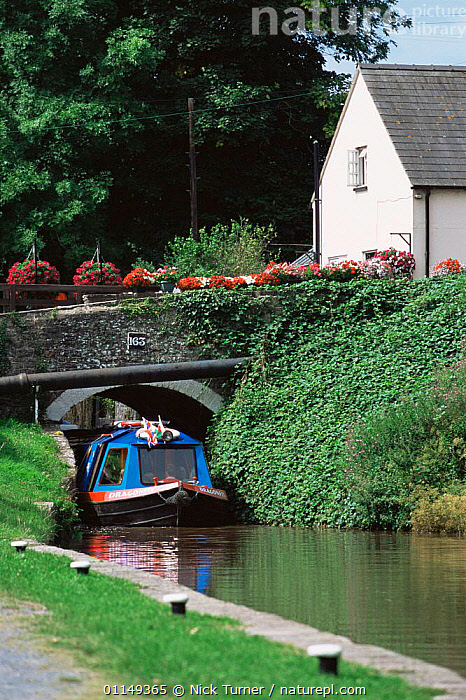 Canal boat passing under Brynich Bridge on the Taff trial, Brecon Beacons NP, Powys, Wales, UK  ,  BOATS,canals,EUROPE,HOLIDAYS,LEISURE,TOURISM,Transport,Travel,UK,VERTICAL,waterways,United Kingdom,Concepts,British,WALES, United Kingdom, United Kingdom,GettyBOV  ,  Nick Turner