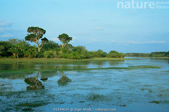 Tropical rainforest reflected in inland lake, Yala NP, Sri Lanka  ,  ASIA,INDIAN SUBCONTINENT,LAKES,LANDSCAPES,NP,REFLECTIONS,RESERVE,TROPICAL RAINFOREST,WATER,WETLANDS,National Park  ,  Ingo Arndt