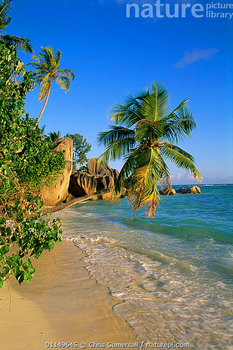 Tropical beach with overhanging palm, Anse Source d'argent, La Digue Island, Seychelles  ,  ASIA,BEACHES,COASTAL WATERS,COASTS,HOLIDAYS,INDIAN OCEAN,INDIAN OCEAN ISLANDS,LANDSCAPES,MARINE,PALM,SEA,SHORELINE,TREES,TROPICAL,VERTICAL,Concepts,Plants  ,  Chris Gomersall