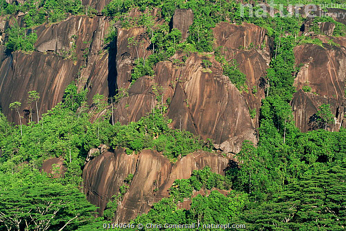 Granite rock outcrops and forest, Mahe Island, Seychelles  ,  ASIA,CLIFFS,INDIAN OCEAN,INDIAN OCEAN ISLANDS,ISLANDS,LANDSCAPES,ROCK FORMATIONS,ROCKS,TREES,TROPICAL,Marine,Geology,Plants  ,  Chris Gomersall
