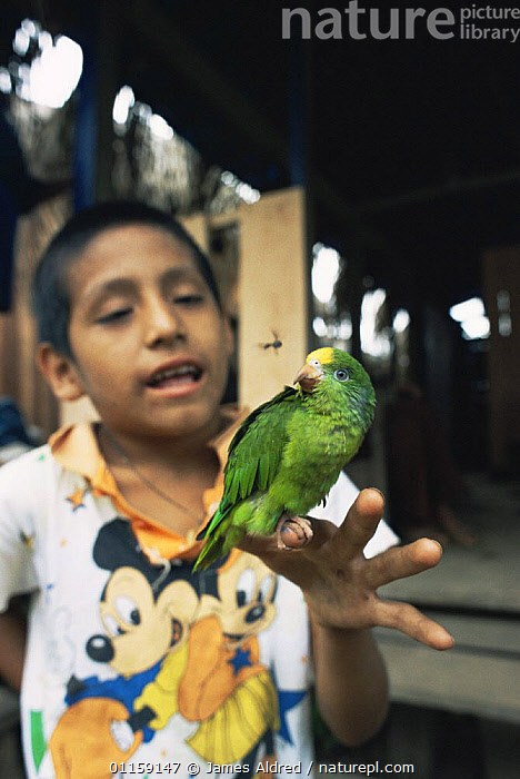 Boy holding juvenile Yellow crowned parrot {Amazona ochrocephala} Tambopata reserve, Amazonia, Peru, 2004  ,  America, PEOPLE,PORTRAITS  ,  James Aldred