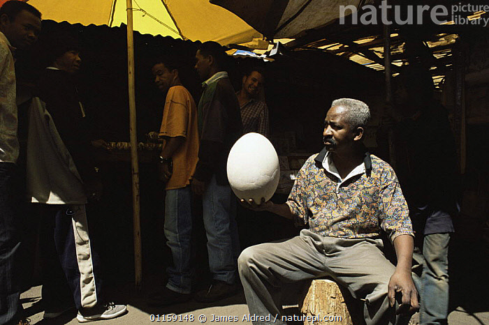 Market trader holding egg of extinct Giant elephant bird {Aepyornis maximus} Madagascar, 2004  ,  BIRDS,EGGS,EXTINCT,FLIGHTLESS BIRDS,LARGE,MADAGASCAR,PEOPLE,SIZE,TRADE,VERTEBRATES  ,  James Aldred