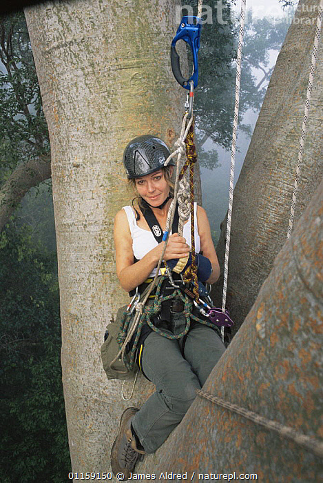 Charlotte Uhlenbroek climbing in the canopy of a giant Mengaris tree {Koompassia excelsa} Danum valley, Sabah, Borneo, Malaysia, 2002. BBC NHU 'Jungles'  ,  ASIA,PEOPLE,PORTRAITS,PRESENTER,RESEARCH,SOUTH EAST ASIA,TREES,TROPICAL RAINFOREST,VERTICAL,Plants  ,  James Aldred