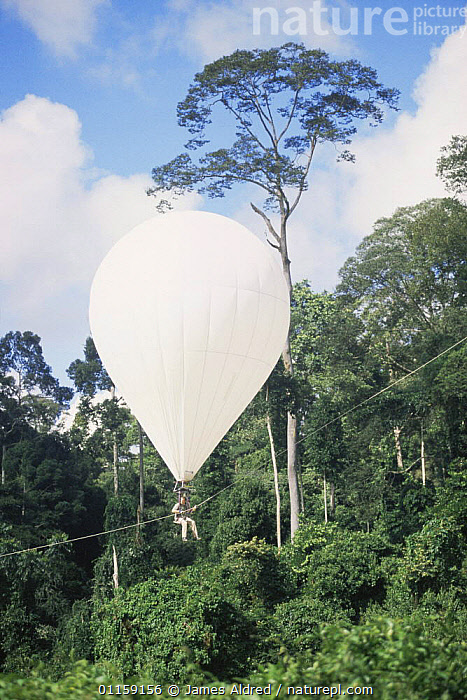 Scientist floating in the 'Bubble', helium filled dirigible, for research on canopy of lowland Dipterocarp rainforest, Danum valley, Sabah, Borneo, Malaysia, 2005  ,  ASIA,HABITAT,LANDSCAPES,PEOPLE,RESEARCH,SOUTH EAST ASIA,TREES,TROPICAL RAINFOREST,VERTICAL,Plants,SOUTH-EAST-ASIA  ,  James Aldred