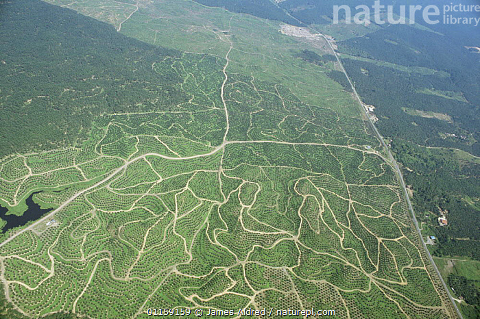 Aerial view of newly planted Oil palm {Elaeis sp} plantations growing on previously logged and cleared regions of lowland Dipterocarp rainforest, Sabah, Borneo, Malaysia, 2005  ,  ASIA,CROPS,DEFORESTATION,LANDSCAPES,SOUTH EAST ASIA,TREES,TROPICAL RAINFOREST,Plants,SOUTH-EAST-ASIA  ,  James Aldred