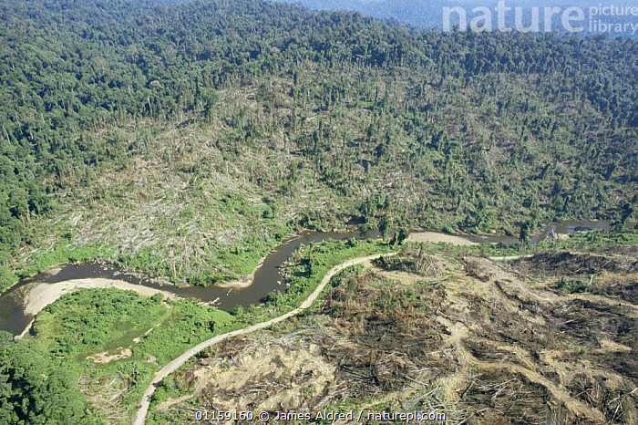 Aerial view of deforestation of lowland Dipterocarp rainforest being clear felled by Tayasan Sabah (Ministry of Forestry) for timber, Sabah, Borneo, Malaysia, 2005  ,  ASIA,DEFORESTATION,LANDSCAPES,SOUTH EAST ASIA,TREES,TROPICAL RAINFOREST,Plants,SOUTH-EAST-ASIA  ,  James Aldred