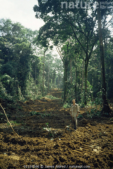 Deforestaion of primary rainforest cleared during selective logging forestry operations, Equatorial Guinea, Central Africa 1999  ,  AFRICA,CENTRAL AFRICA,DEFORESTATION,PEOPLE,TREES,TROPICAL RAINFOREST,VERTICAL,Plants,WEST-AFRICA  ,  James Aldred