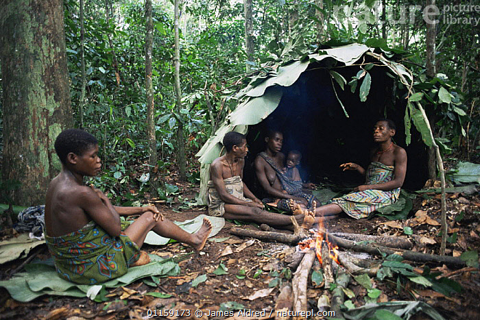 By'Aka pygmy women at forest camp, with shelter built from leaves, Bayanga, Central African Republic, 2003  ,  AFRICA,CENTRAL AFRICA,CENTRAL AFRICA,FIRE,HOMES,PEOPLE,RESERVE,TENTS,TRADITIONAL,TRIBES,TROPICAL RAINFOREST,SCOTLAND  ,  James Aldred