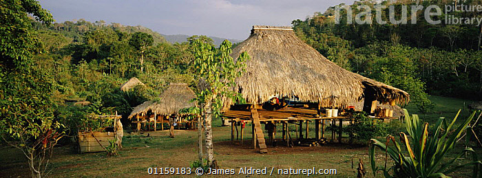 Traditional thatched houses of Embera Indians, Llano Bonito village, Darien Province, Panama, Central America 2006  ,  BUILDINGS,CENTRAL AMERICA,LANDSCAPES,PANORAMIC,PEOPLE,TROPICAL RAINFOREST,VILLAGES,CENTRAL-AMERICA  ,  James Aldred
