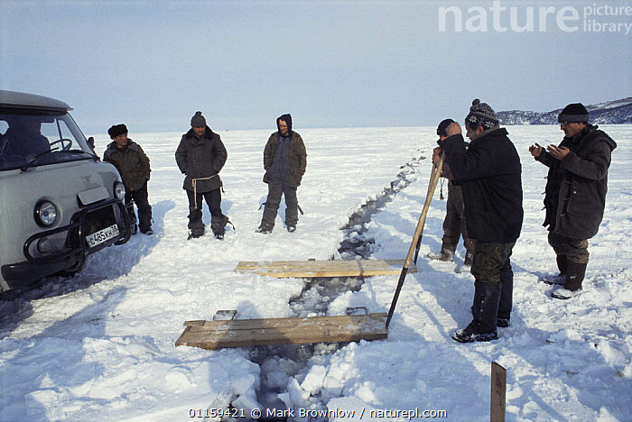 Local men preparing planks to use as bridge across cracking ice plate, 1 mile out from shoreline of Lake Baikal, world's deepest and oldest (and largest by volume) freshwater lake, Siberia, Russia