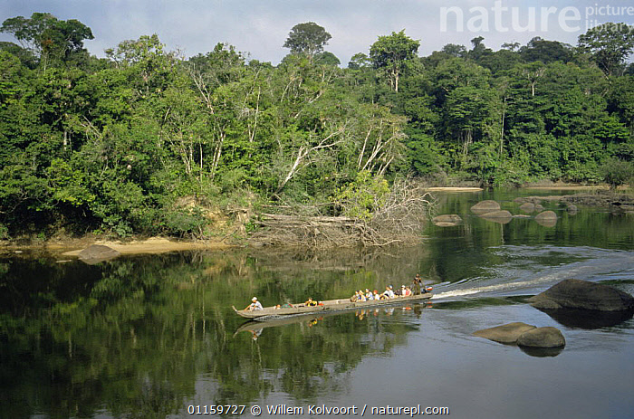 Tourists in Korjaal (canoe) travelling along Coppename River, Central Suriname Nature reserve, Suriname . 2003.  ,  BOATS,CENTRAL AMERICA,ECOTOURISM,LANDSCAPES,PEOPLE,RESERVE,RIVERS,SOUTH AMERICA,SURINAM,TOURISM,TOURISTS,TRADITIONAL,TRANSPORT,TRAVEL,TRAVELLING,TROPICAL,TROPICAL RAINFOREST,WATER,SOUTH-AMERICA  ,  Willem Kolvoort