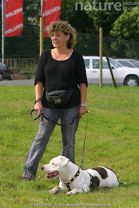 Woman with American Staffordshire Terrier wearing harness  ,  COLLAR,DOGS,LYING DOWN,OUTDOORS,PEDIGREE,PEOPLE,PETS,TERRIERS,TRAINING,VERTEBRATES,VERTICAL,Canids  ,  Petra Wegner
