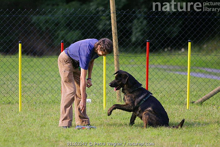 Woman with Mixed Breed Dog  ,  AGILITY,ASSAULT COURSE,DOGS,OBEDIENCE,OUTDOORS,PEOPLE,PETS,SITTING,SLALOM,STANDING,TRAINING,TRAINING COURSE,VERTEBRATES,Canids  ,  Petra Wegner