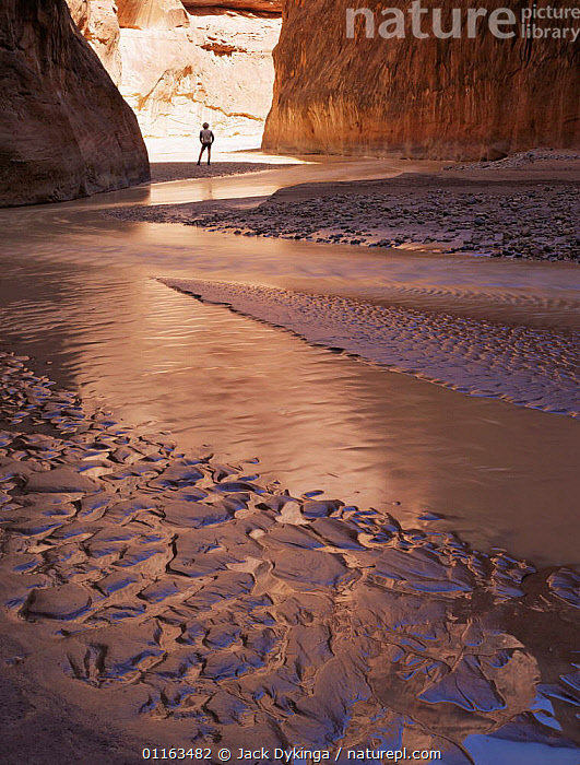 Hiker amongst sand stone cliffs and wave ripple patterns, Paria Canyon, Arizona, USA  ,  CANYONS,EROSION,LANDSCAPES,NORTH AMERICA,PEOPLE,RESERVE,ROCK FORMATIONS,USA,VERTICAL,Geology  ,  Jack Dykinga