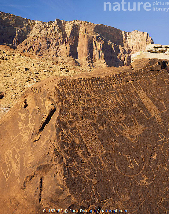 Rock carvings / petroglyphs on boulders near Lee's Ferry, Paria Canyon, Arizona, USA  ,  ANCIENT,ART,ARTIFACTS,LANDSCAPES,NORTH AMERICA,PAINTINGS,RESERVE,USA,VERTICAL  ,  Jack Dykinga