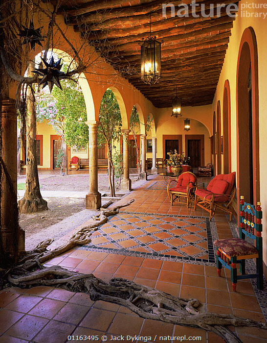 Courtyard of Hotel La Posada, El Fuerte, Sinaloa, Mexico, with {Ficus sp} roots spreading across the tiled floor.  ,  ARCHES,BUILDINGS,CENTRAL AMERICA,FIG TREE,MEXICO,TRADITIONAL,VERTICAL,CENTRAL-AMERICA  ,  Jack Dykinga