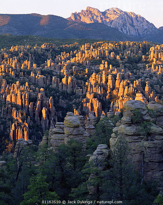 Eroded rock spires of The Heart of the Rocks with Cochise Head in the background, sunset, Chirichahua National Monument, Arizona, USA  ,  EROSION,LANDSCAPES,NORTH AMERICA,RESERVE,ROCK FORMATIONS,USA,VERTICAL,Geology  ,  Jack Dykinga