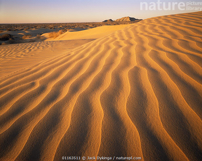 Sand dune patterns with tracks of beetle, Grand Desierto, Sierra Enterrada, Mexico  ,  CENTRAL AMERICA,DESERTS,INSECTS,LANDSCAPES,MEXICO,RIPPLES,SAND DUNES,Invertebrates,CENTRAL-AMERICA  ,  Jack Dykinga