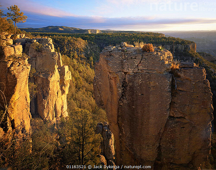 Cliffs of Copper Canyon at dawn, nr Diviadero, Barranca del Cobre NP, Chihuahua, Mexico  ,  CENTRAL AMERICA,CLIFFS,LANDSCAPES,MEXICO,RESERVE,SUNRISE,Geology  ,  Jack Dykinga