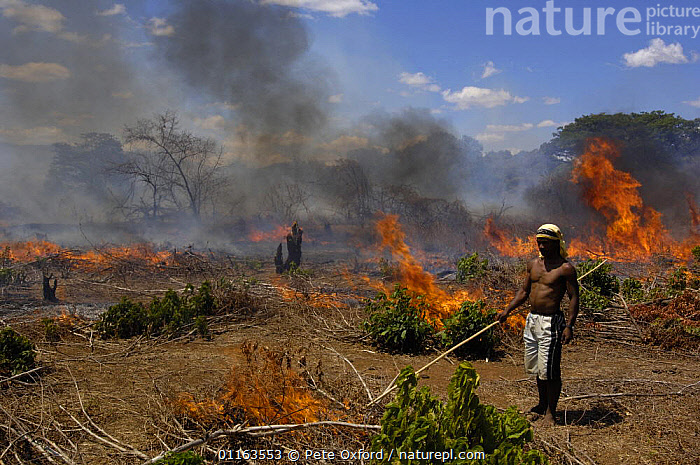 Tavy or Slash-and-burn-agriculture, nr Daraina, NE Madagascar. This method of farming where new forest is cut down after a few years when the soil is no longer productive is blamed for the permanent destruction of the forests. Soil is poor and afterwards there is a huge problem of erosion. 2005  ,  FIRE,flames,MADAGASCAR,PEOPLE,TRADITIONAL  ,  Pete Oxford