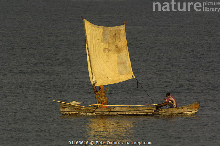Piroques or outrigger canoes going out to sea from the Bombetoka delta for the day to fish. Mahajunga. Western MADAGASCAR 2005  ,  BOATS,Fishing,MADAGASCAR,PEOPLE,TRADITIONAL  ,  Pete Oxford