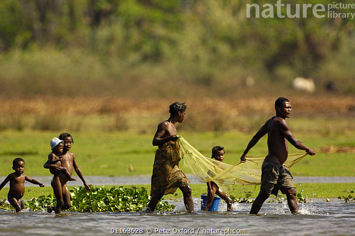 Family fishing with net in Lake Ravelobe across from the Ampijeroa Forest Station. Ankarafantsika Nature Reserve, Western deciduous forest. MADAGASCAR   2005  ,  FAMILIES,Fishing,FRESHWATER,LAKES,MADAGASCAR,nets,PEOPLE,TRADITIONAL,WORKING  ,  Pete Oxford
