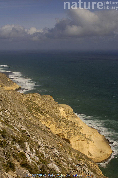 Sandstone cliffs of Cap Sainte Marie Special Reserve on the southern most tip of MADAGASCAR.  ,  COASTS,LANDSCAPES,MADAGASCAR,VERTICAL  ,  Pete Oxford