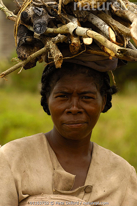 Antandroy woman collecting firewood. Spiny forests of Southern Madagascar 2005  ,  MADAGASCAR,PEOPLE,PORTRAITS,TRIBES,VERTICAL,Wood  ,  Pete Oxford