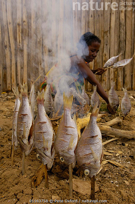 Antandroy woman smoke-drying fish. It has started to rain so these fish caught yesterday can not be sun-dried, Lavanono. Southern MADAGASCAR 2005  ,  FIRE,food,MADAGASCAR,PEOPLE,smoke,TRADITIONAL,TRIBES,VERTICAL  ,  Pete Oxford