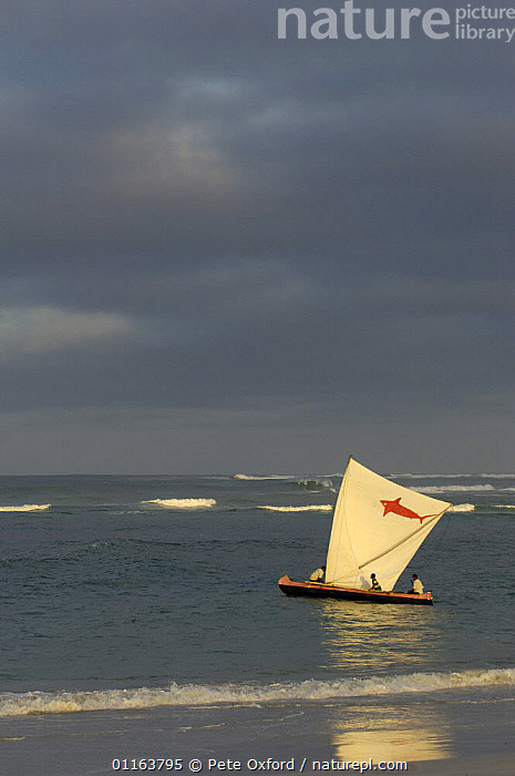 Piroque or outrigger canoe going out to sea from the Vezo fishing village of Itampolo for the day to fish. Itampolo. South-western MADAGASCAR 2005  ,  BOATS,COASTS,Fishing,MADAGASCAR,PEOPLE,TRADITIONAL,VERTICAL  ,  Pete Oxford