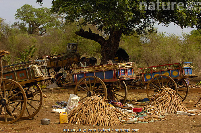 Mahafaly local market specializing in yams, south-western MADAGASCAR.  ,  carts,CROPS,MADAGASCAR,TRADE,TRADITIONAL,VEGETABLES  ,  Pete Oxford
